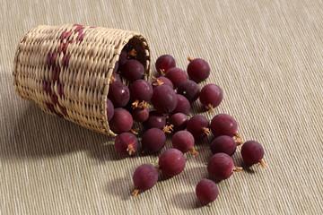 uva spina raccolto