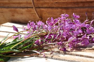 Fireweed(Epilobium angustifolium)