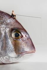 Angler hat dicken Fisch and der Angel