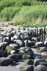Steine und Schilf am Strand
