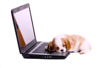 Hund Welpe schlafend am Laptop