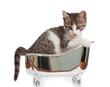 Gatto in vasca