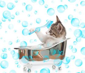 Gattino che fa il bagno