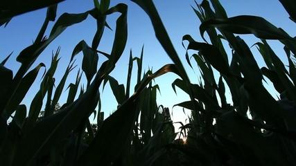 Campo coltivato - panoramica