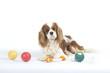 quatre jouets pour un chien