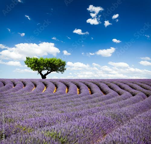 Lavande Provence Frankreich / Lavendelfeld in Provence, Frankreich