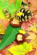 Laubwald im Herbst