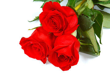 The three fresh beautiful red roses from garden