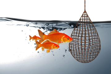 Fische vor dem Netz