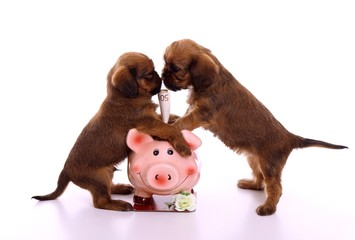 zwei Welpen streiten sich ums Geld