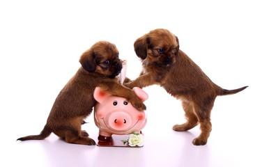 zwei Welpen halten Sparschwein