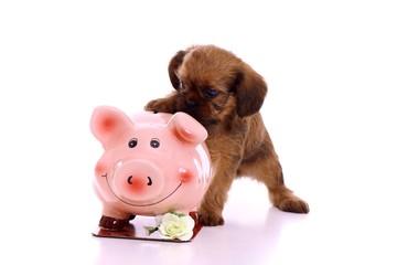 Welpe zeigt mit Pfote auf Sparschwein