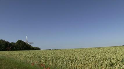 champs de blé avec le moulin de coquelles