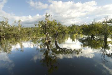 Brasile, amazzonia, silves, foresta allagata