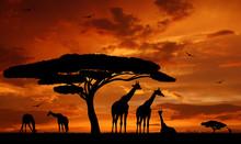 """Постер, картина, фотообои """"herd of giraffes in the setting sun"""""""