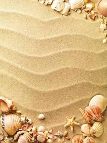 muszelki z piaskiem jako tło