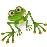 Fototapety frog