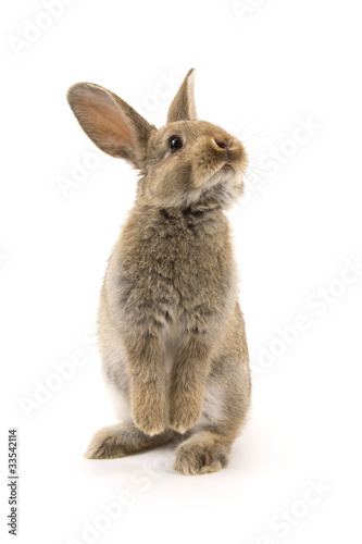 Leinwandbild Motiv Adorable rabbit isolated on white