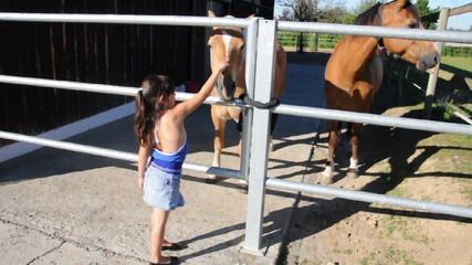 Pferde auf dem Hof