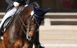 Dressage: portrait of bay horse - 33555140