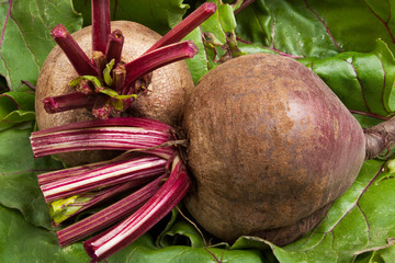 two beets on leaves