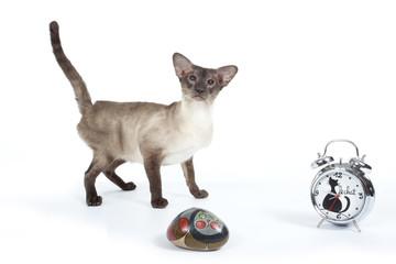 chat siamois et objets décoratifs félins