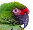 Fototapeten,papagei,papagei,close-up,nahaufnahmen