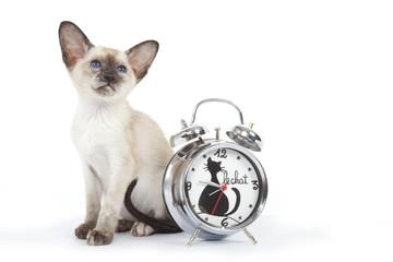 chat siamois et réveil matin décoré chat
