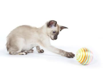 chaton qui attrape sa balle qui roule