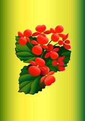 Комнатный цветок бегония