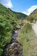 shropshire streamlet