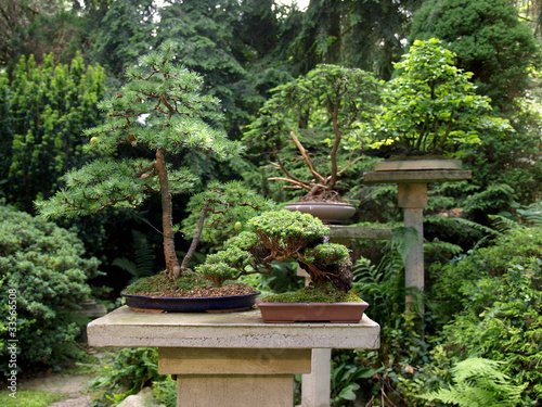 bonsai garten by exquisine royalty free stock photos. Black Bedroom Furniture Sets. Home Design Ideas