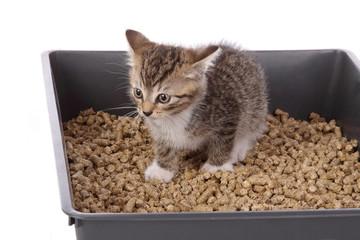 chaton dans litière