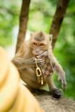 Monkey theft poster