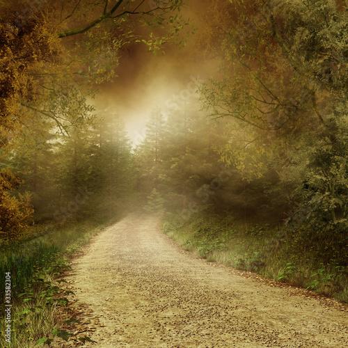 Fototapeta Jesienny las z wiejską drogą