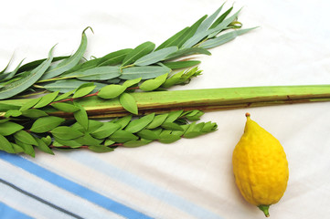 Four Species for Jewish Holiday Sukkoth
