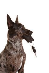 Hund mit Autoschlüssel im Maul