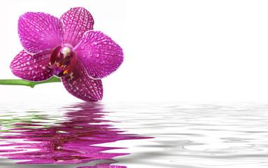 Orchideen-Reflexe