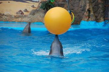 Дельфин держит желтый мяч