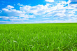 Beautiful field with a green grass and the beautiful sky on hori