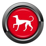 Picto, internet, bouton, chien, animal, canin, chenil, lévrier poster