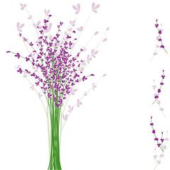summertime purple Lavender flower