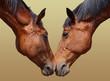 Fototapeten,pferd,paar,freundinnen,liebe