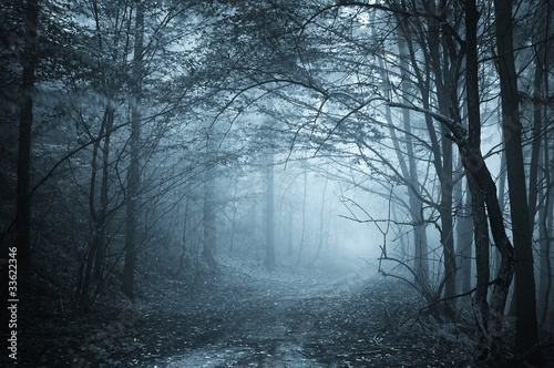 blue light in a mysterious forest with fog