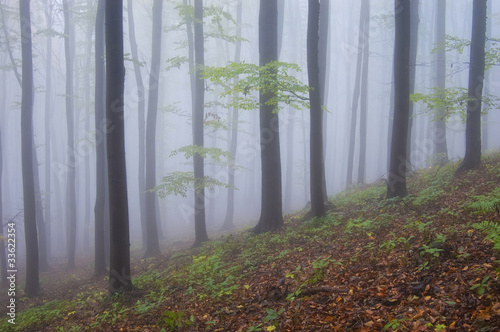 colorful forest with purple fog in autumn