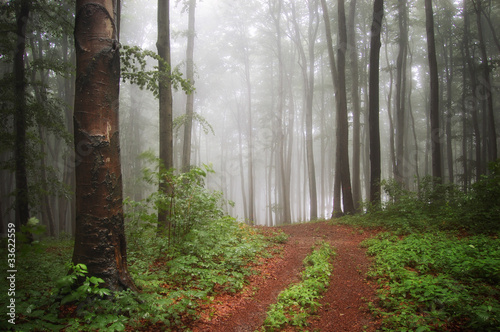 fog in a green colorful forest after rain