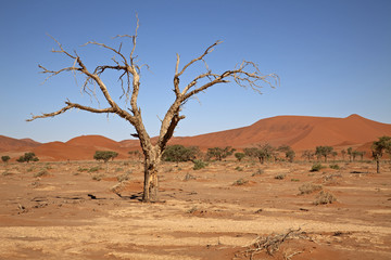 Namib-Naukluft-Nationalpark