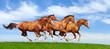 Four sorrel stallions gallop