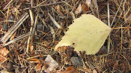 Ants on leaf.