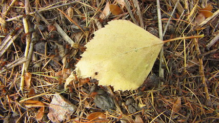Yellow  leaf and ants.